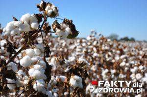 bawełna-faktydlazdrowia-pl