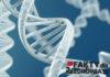 geny-faktydlazdrowia-pl