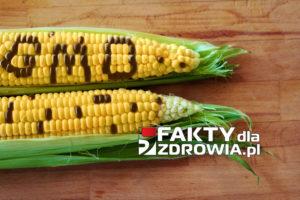 gmo-faktydlazdrowia-pl