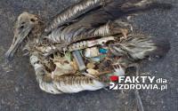 Ryby zjadają plastik z zanieczyszczonych oceanów, a będąc częścią łańcucha pokarmowego szkodzą ludziom