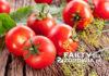 Pomidory i likopen