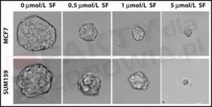 rak piersi brokuły sulforafan - sok z brokułów