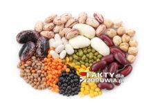 Roślinny strączkowe a cholesterol