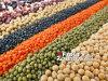 Gotowana fasola czy kiełki fasoli – co lepsze w walce z rakiem i dla zdrowia mózgu?